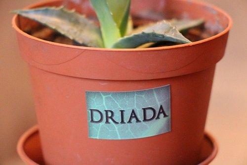 Светлица «DRIADA» 108 Foto - 7continent.com.ua